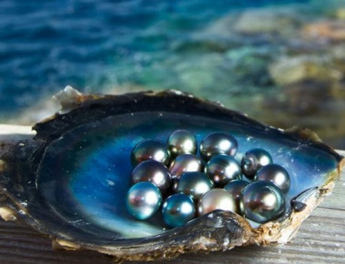 The Rise of Eco-friendly Pearl Farming by Brian Clark Howard